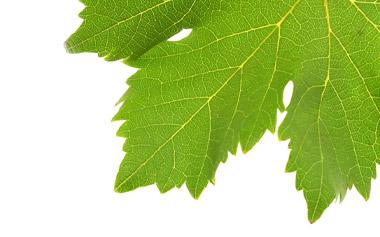retallack viticulture pty ltd