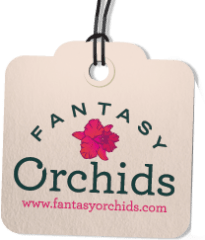 fantasy orchids