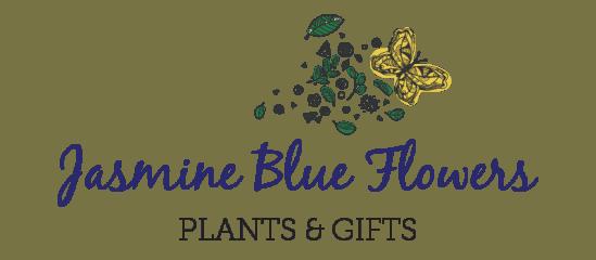 jasmine blue flowers plants