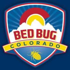 bed bug colorado