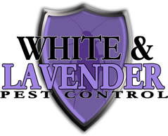 white and lavender pest control