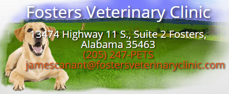 fosters veterinary clinic