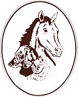 brenford south animal clinic