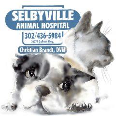 selbyville animal hospital