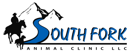 south fork animal clinic