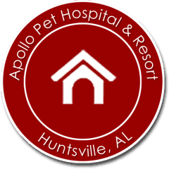 apollo animal hospital pc