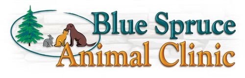 blue spruce animal clinic