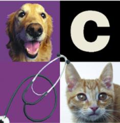 carter veterinary medical center