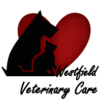 westfield veterinary care