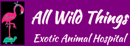 all wild things exotic animal hospital