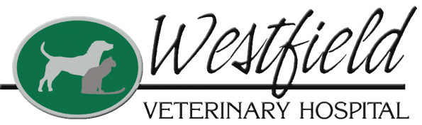 westfield veterinary hospital