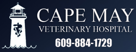 cape may veterinary hospital