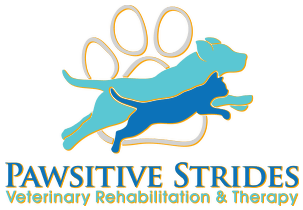 pawsitive strides veterinary rehabilitation and therapy