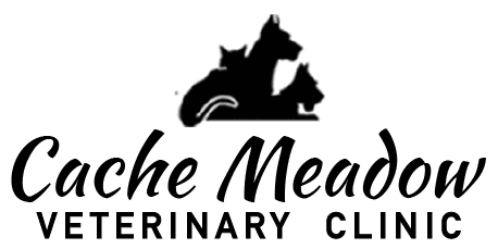 cache meadow veterinary clinic