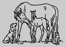 kent veterinary center
