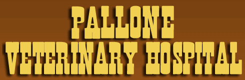 pallone veterinary hospital