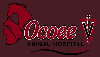 ocoee animal hospital