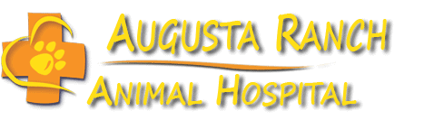 augusta ranch animal hospital