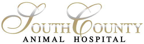 south county animal hospital
