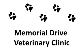memorial drive veterinary clinic