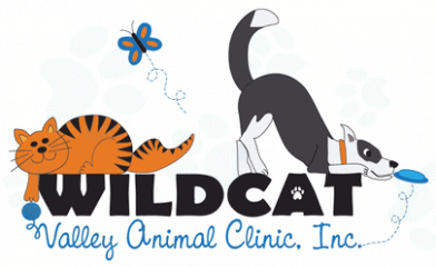 wildcat valley animal clinic
