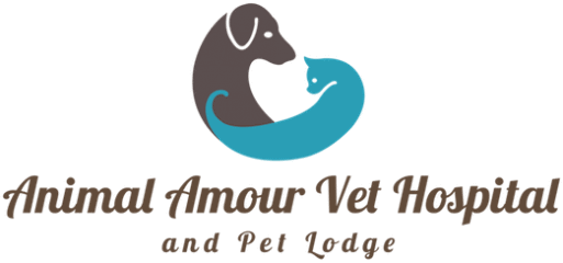 animal amour veterinary hospital and pet lodge