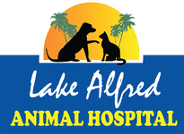 lake alfred animal hospital