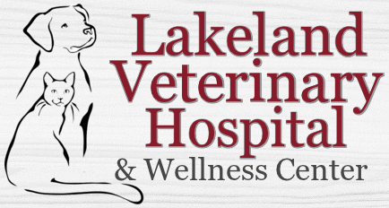 lakeland veterinary hospital & wellness center