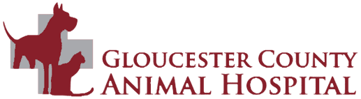 gloucester county animal hospital