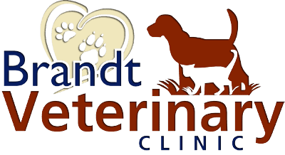 brandt veterinary clinic
