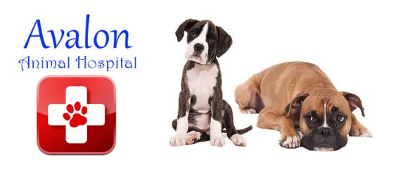 avalon animal hospital